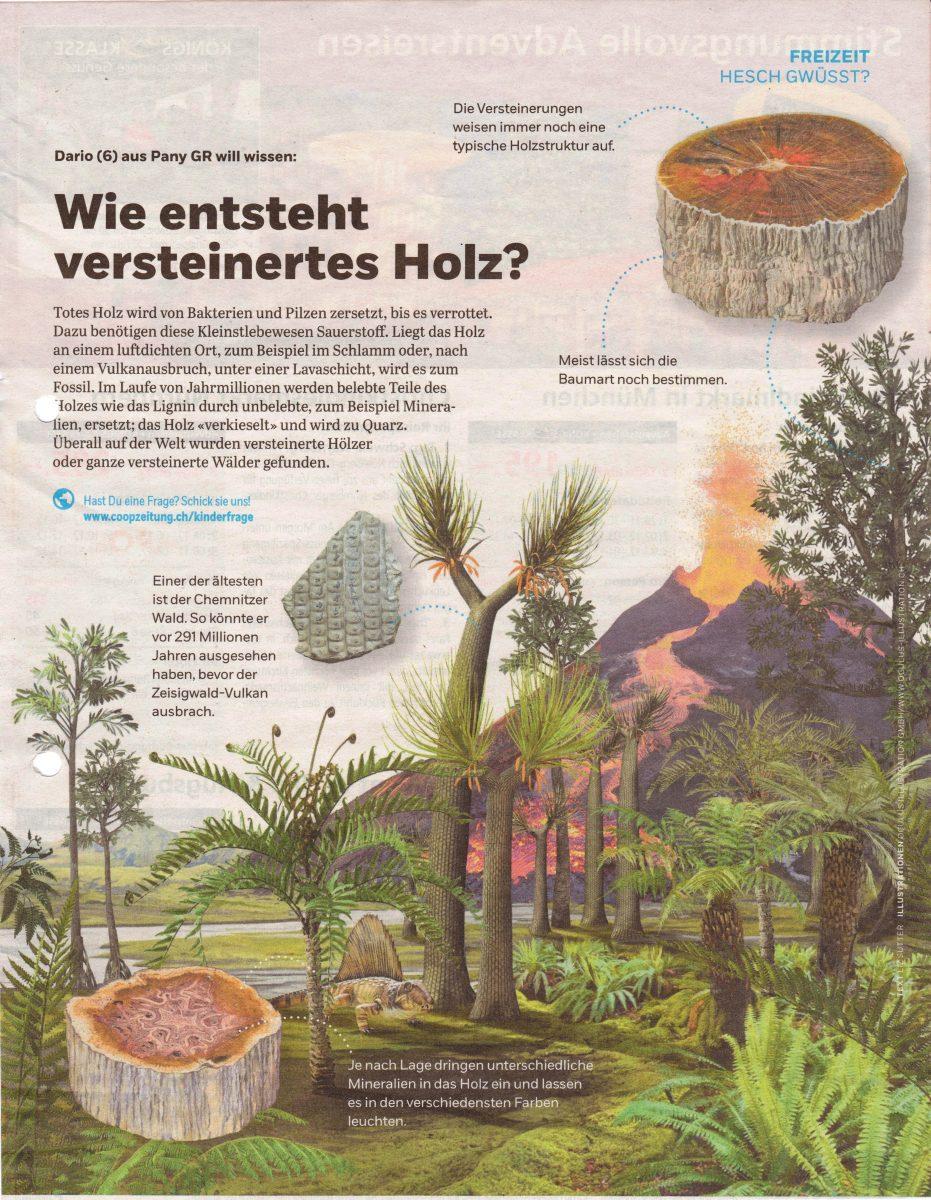 Hesch Gwüsst? - Coopzeitung